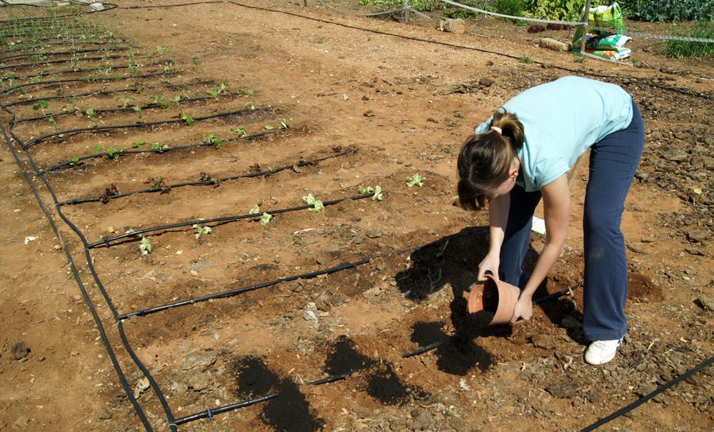 El Ayuntamiento crea huertos municipales para la enseñanza de métodos agroecológicos