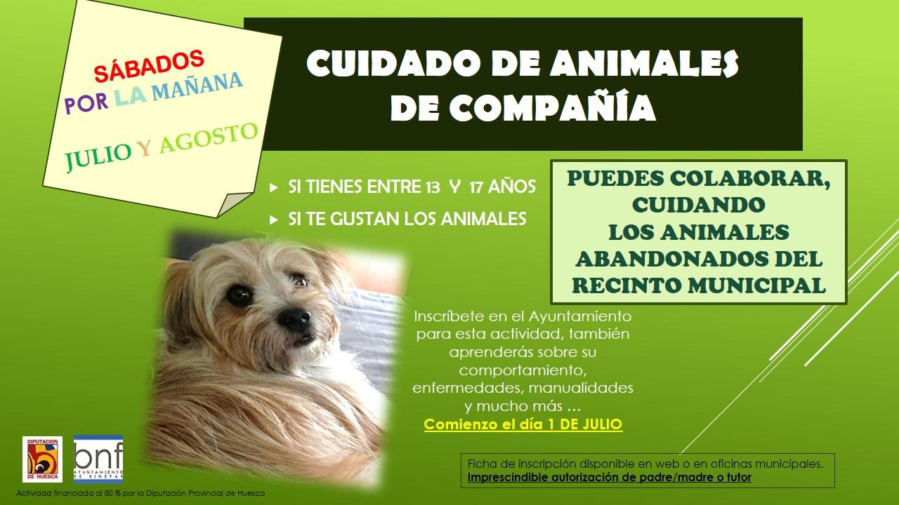 Cartel curso de cuidados de animales de compañía