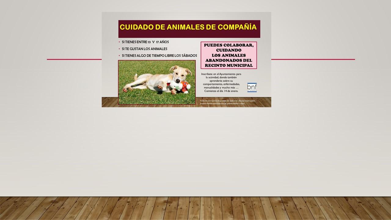 Colaboración para el cuidado de animales abandonados