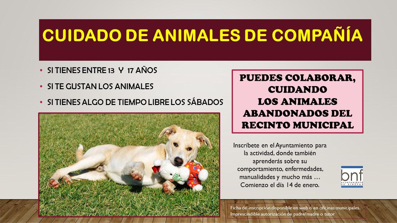 Cartel cuidado de animales de compañía